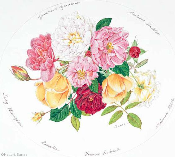 【服部早苗:ローズブーケ(バラ科) Rosa 'Lady Hillingdon', R. Mortimer Sackler, R. The Generous Gardener, R. 'Francis Dubreuil', R. Malvern Hills, R. 'Cornelia'】
