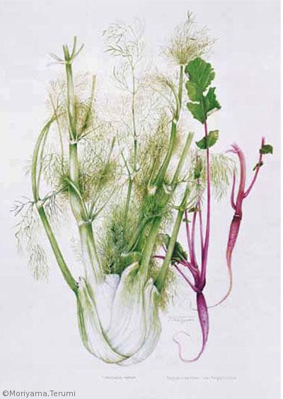 【森山照美:イタリアウイキョウ(セリ科)、ダイコン'しずむらさき'(アブラナ科)Foeniculum vulgare var. azoricum, Raphanus sativus 'Shizu-murasaki'】
