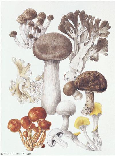 【山川久恵:キノコ Edible fungi】