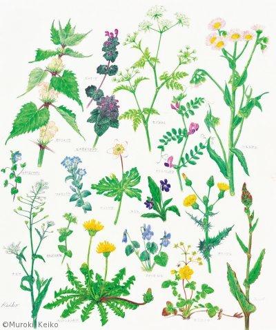 【室木彗子:春の訪れ(春の草花17種)(シソ科他)Spring Wild Flowers】